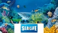 Save up to 35% with SAVER FAMILY DEALS