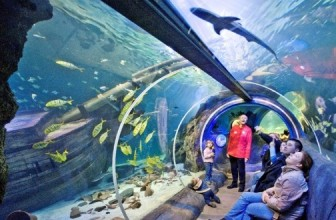 UP TO 40% DISCOUNT ON SEALIFE TICKETS